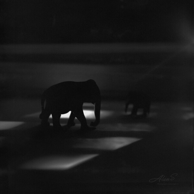 Elephant - Film Hasselblad