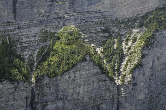 degli alberi la tenacia