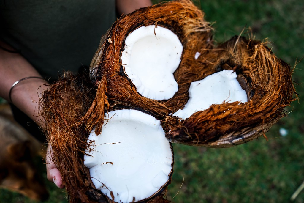 photo of hands holding coconut
