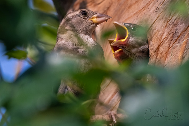 My yard is so active with dozens of nesting birds at this time of year.