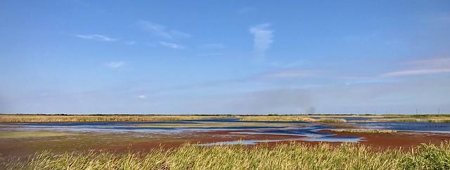 Winter in the Marsh...