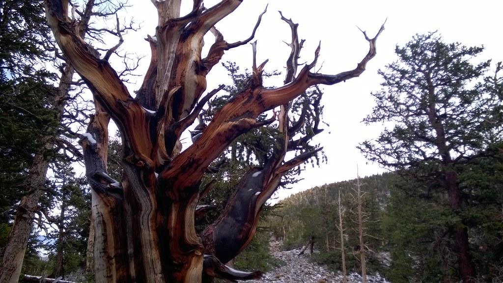 Bristlecone Trail, Great Basin National Park  10/4/2015