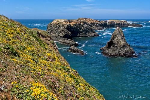 california seascape mendocino ocean nature coast pacificocean wildflowers mendocinoheadlandsstatepark