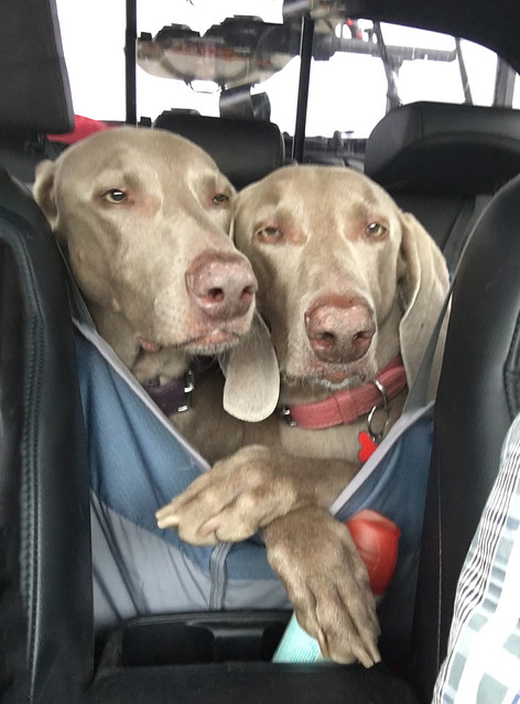 7/12 Hanna + Juno on a road trip