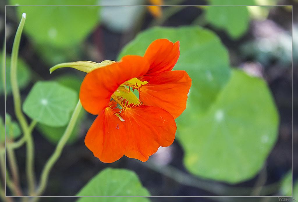 Обещанные цветочки-листики. IMG_1169
