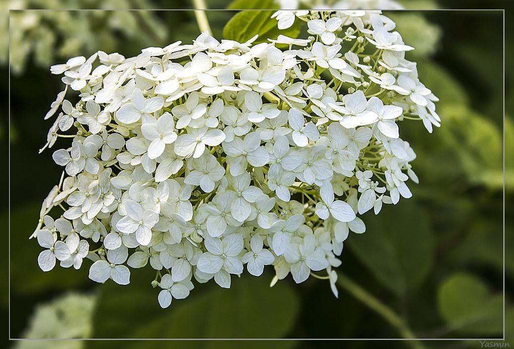 Обещанные цветочки-листики. IMG_1172