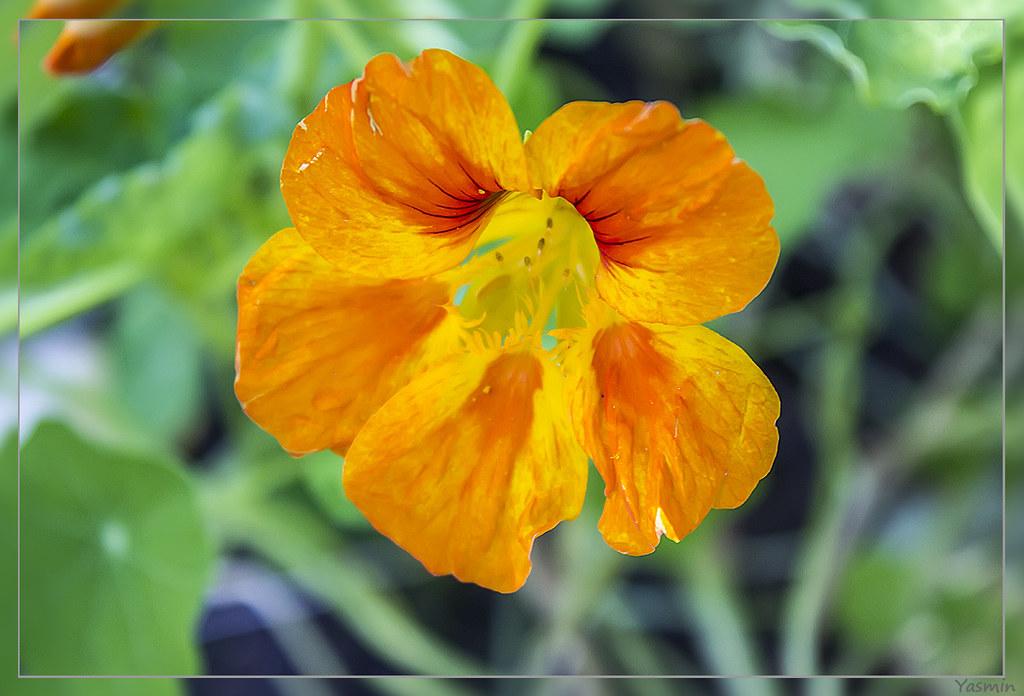 Обещанные цветочки-листики. IMG_1171