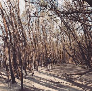 Kisoroszi szigeten a fák között sétál