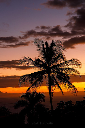 bigisland kona sunsetssunrisesaroundtheworld121countries sunset sunsetssunrises sonnenuntergang palms hawaii canoneosr canonrf24105 usa