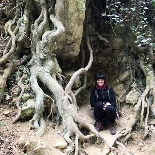 dera szurdok fák gyökerei