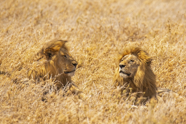 Fratelli / Brothers (Serengeti National Park, Tanzania)