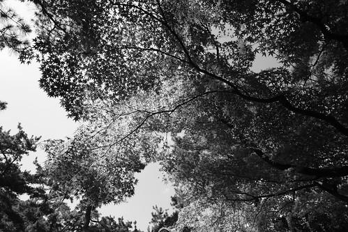 31-07-2020 Ritsurin Garden, Takamatsu vol02 (24)