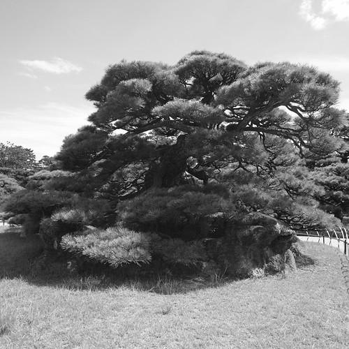 31-07-2020 Ritsurin Garden, Takamatsu vol02 (8)
