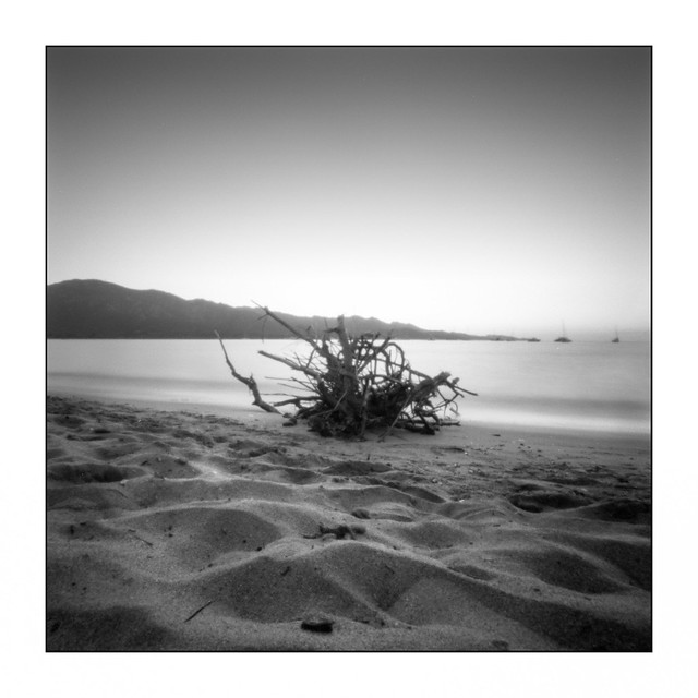 Driftwood and Desert des Agriates