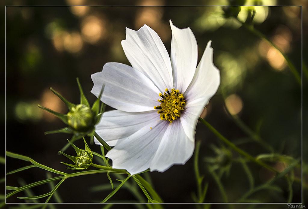 Обещанные цветочки-листики. IMG_1170