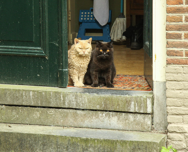 The Cat Watch