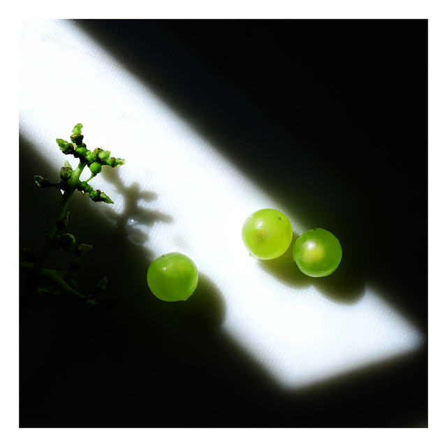 Three little grapes looking for light