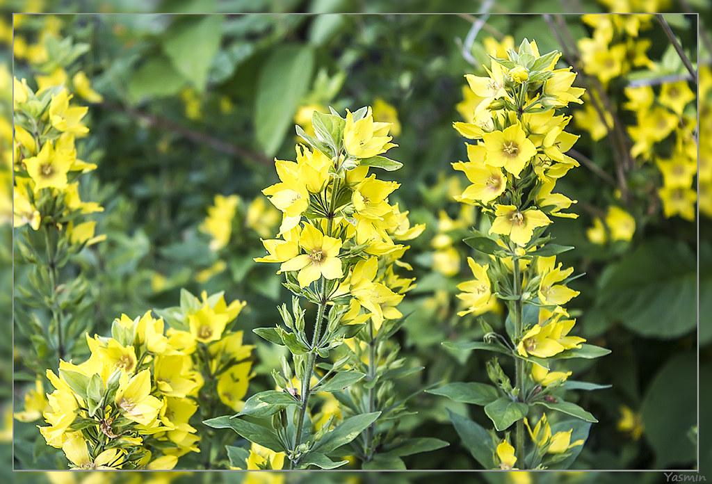 Обещанные цветочки-листики. IMG_1173