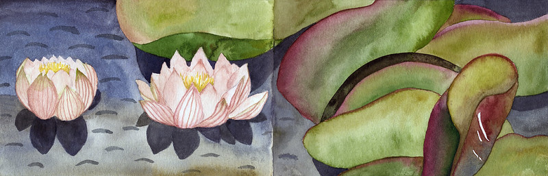 "Pink waterlilies in the Lagoons in a watercolour paper sketch book opened to 17"" x 5 1/2"