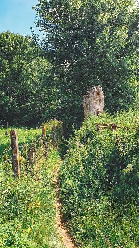 op weg naar het Steenbergbos