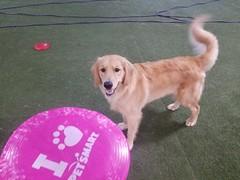 Frisbee 7_31_20