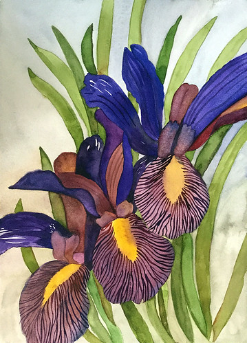 "Watercolour painting of purple Flag Irises, 12"" x 16"" 