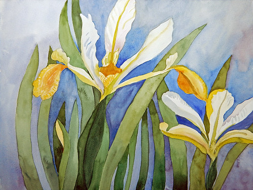 "Watercolour painting of yellow and white Flag Irises; 16"" x 12"""