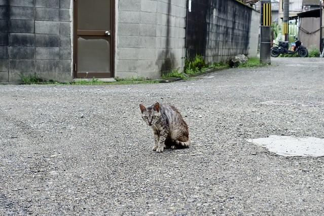 Today's Cat@2020ー07ー31