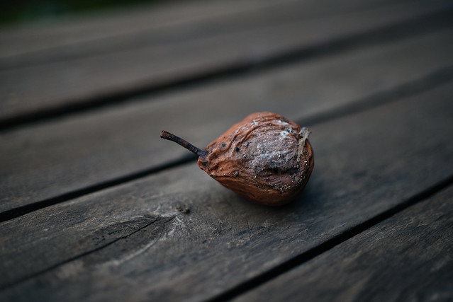 Infected pear on wooden table closeup.