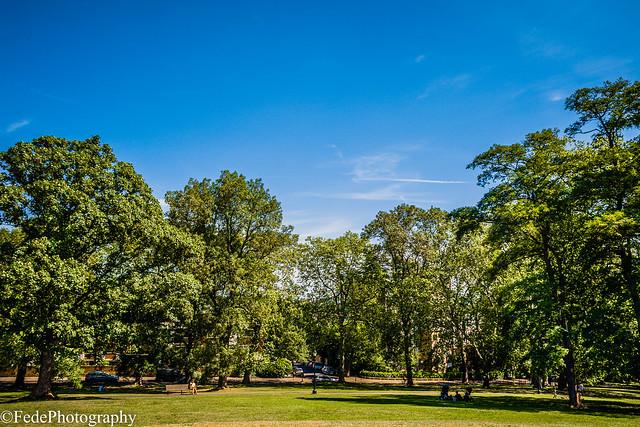 Panorama Alberi III - Primrose Hill - London