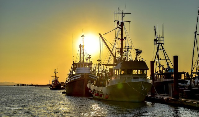 Harbour  Gold - Steveston, BC