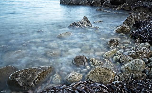 Entre piedras y algas