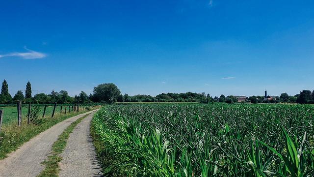 tussen Dendermonde en Denderbelle