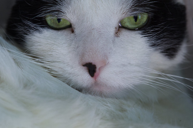 Cute, by a nose -[ Happy Caturday }-