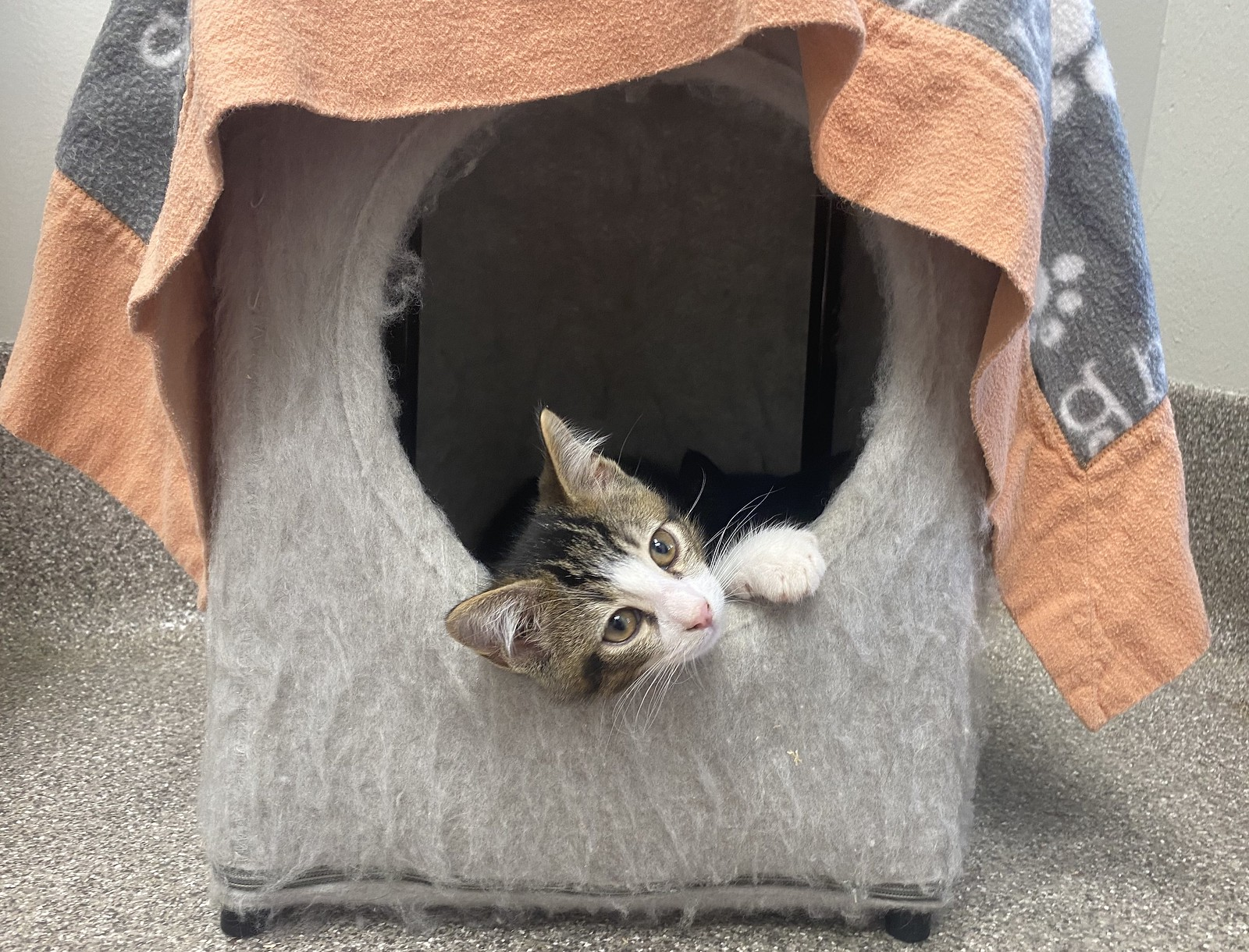 Ingham County Animal Control & Shelter Has A New Weekly Cat Adoption Special
