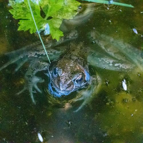frog in a bird bath