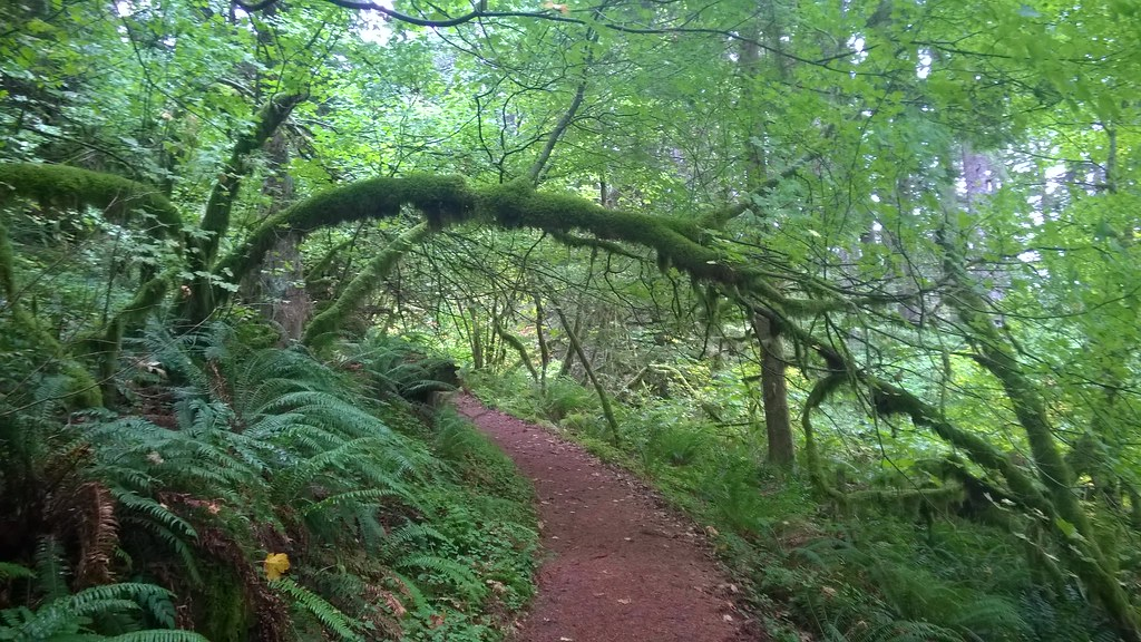 Wahkeena Trail, Columbia River Gorge National Scenic Area  10/9/2015