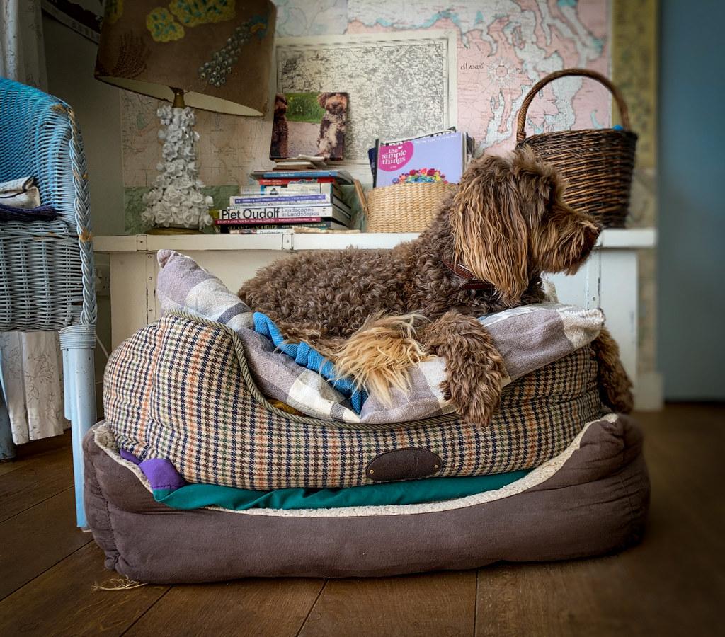 Many beds