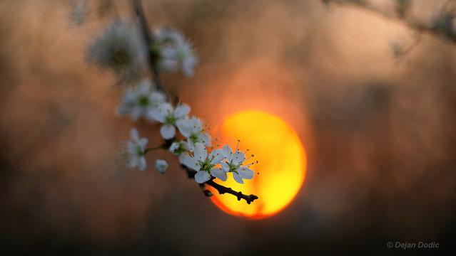 Spring in Westphalia