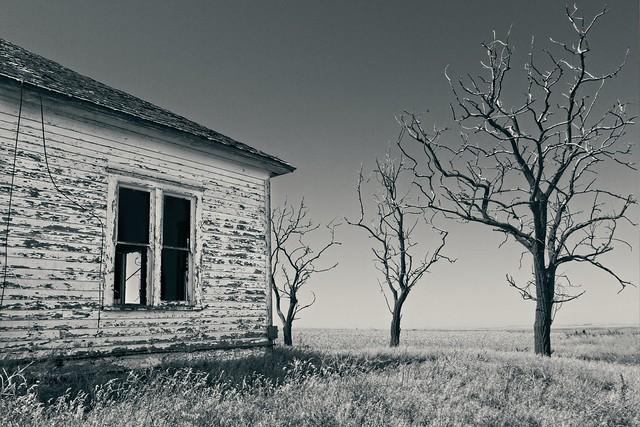 Abandoned Farm Dead Trees 3611 A