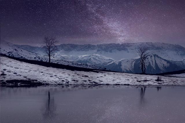 Stars & Standing trees