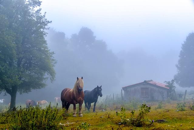 Nieblas  por Urbasa.