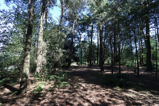 Ashdown Forest, An Enchanted Place