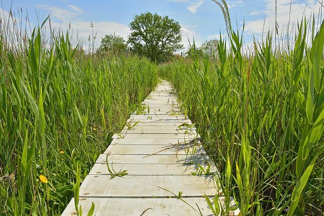 wooden walkway across wetland