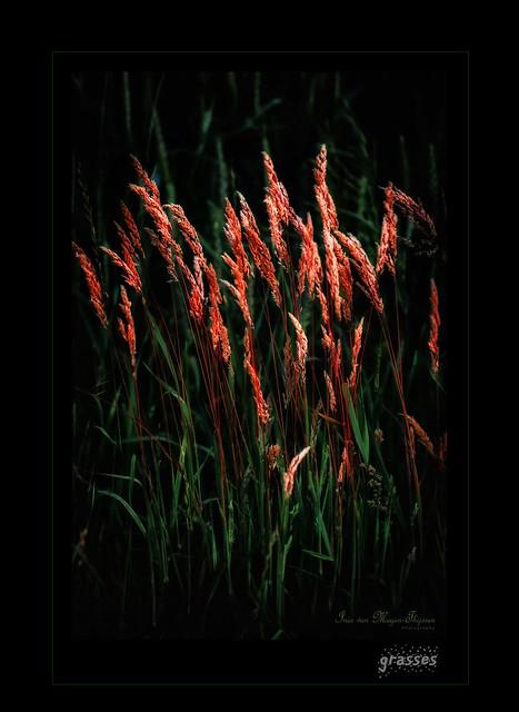 Dia-box  -  grasses IV