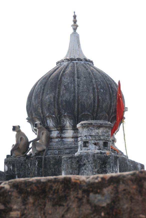 DSC_1676IndiaPushkar