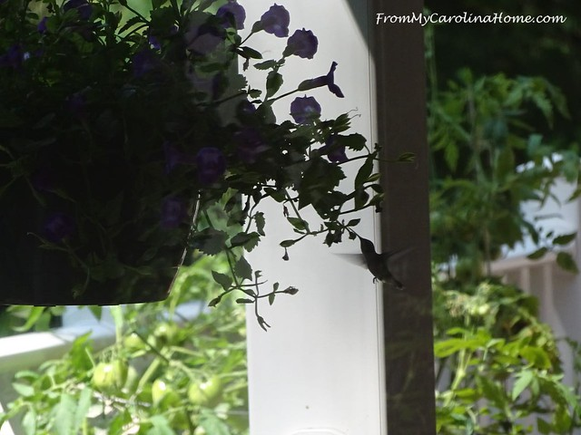 August in the Garden at FromMyCarolinaHome.com