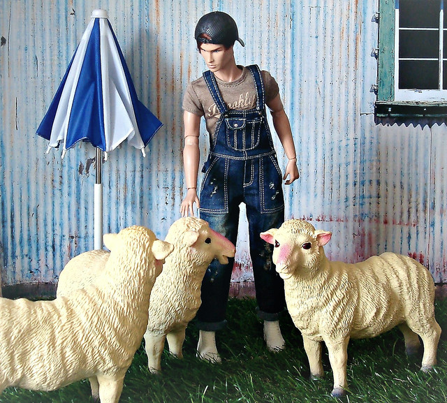 All my sheep 🐑🐑🐑