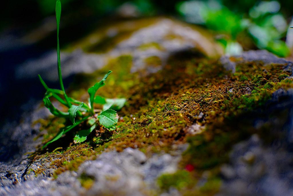 Nature in Miniature