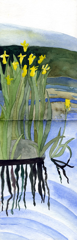 Yellow Flag Irises reflecting in the duck pond in my watercolour sketch book